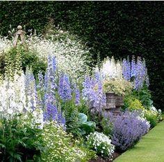33 plantas bonitas para o Jardim Branco - Garten Pflanzen - Amazing Gardens, Beautiful Gardens, Beautiful Flowers, Garden Design Images, Landscape Design, English Garden Design, Delphinium, Design Jardin, Cottage Garden Design