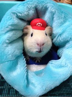 You All Need More Cosplaying Guinea Pigs In Your Life