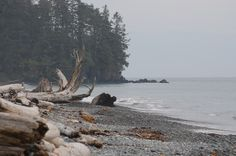 Now we see it as if from behind the haze of grey mist.but back then the days fell away like the skipping of grey stones on a grey shore, sunk too fast under the lapping of grey waves Coastal Paint, Grey Stone, Vancouver Island, Pacific Northwest, West Coast, Butler, Mists, Places Ive Been, Beaches