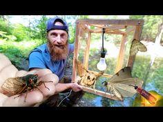 Fish Feeder, Bird Feeders, Fish Lamp, Easy Shots, Popular Articles, Trout, Chopper, Plexus Products