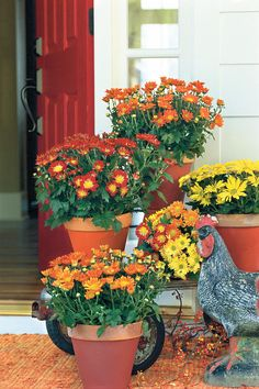 Easy Fall Planters for Decoration - Kitchen Inst Mum Planters, Autumn Planters, Potted Mums, Balcony Flowers, Flowers Garden, Flowers On Porch, Terrace Decor, Fall Mums, Autumn Garden