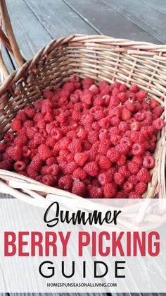 Summer berry picking is one of the most amazing parts of the season. It allows us to get outside, connect with nature, support our local food economy, and provides delicious seasonal food too. Organic Herbs, Organic Fruit, Organic Gardening, Herb Gardening, Flower Gardening, Garden Renovation Ideas, Berry Picking, Diy Herb Garden, Eat Seasonal