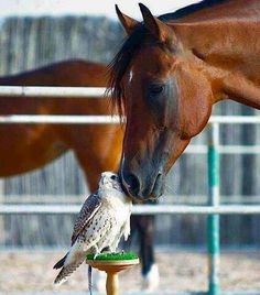 Oh to be kissed by a horse♡♡♡