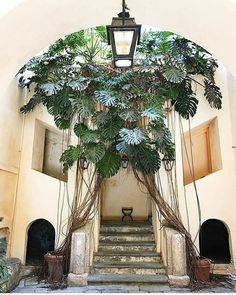 This 100 year old monstera is growing in a small town in southern Italy called Falerna Marina. Give a name to this fabulous queen! Tropical Garden, Tropical Plants, Exotic Plants, Decoration Plante, Best Indoor Plants, Deco Design, Green Plants, Hanging Plants, Plant Decor