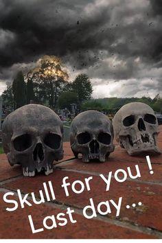 Skull for sale Skulls For Sale, Skull Model, Skull Decor, Human Skull, Halloween Skull, Skeleton, Bones, Shop, Art