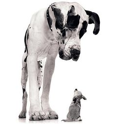 I should try getting a picture like this of our Great Dane and Tea Cup Chihuahua . :)