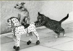 when cats and dogs are friends -this was me hna