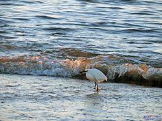 Egretta garzetta on the sea shore by Francesca Murroni Ph on 500px