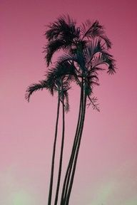 black palm tree on pink idea for painting California Love, California Travel, Pink Sky, Pink Sunset, Sunset Sky, Everything Pink, Summer Breeze, Pics Art, Summer Of Love