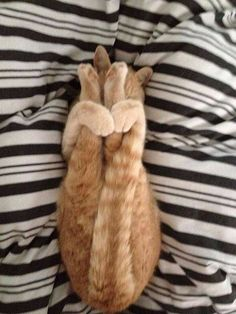 """""""Then, pull your tail and legs to your face. Then, fall asleep and wait until it's dinnertime for best results."""""""