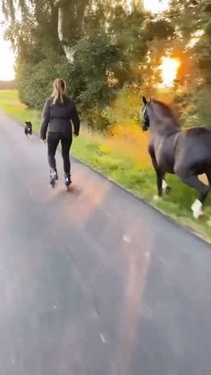 Horses And Dogs, Cute Horses, Horse Love, Beautiful Horses, Animals Beautiful, Super Cute Animals, Cute Little Animals, Cute Funny Animals, Cute Dogs