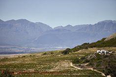 Swartland landscape in South Africa