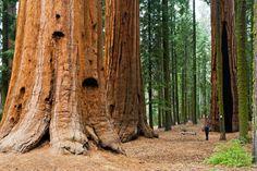 Explore Sequoia National Park, California - Bucket List Dream from TripBucket