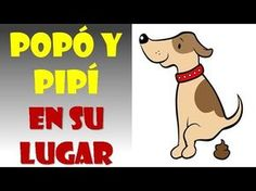 Como enseñar a un perro a hacer sus necesidades en un solo lugar - YouTube Animals And Pets, Cute Animals, Puppy House, Tiny Puppies, Mundo Animal, Dog Houses, Dog Care, Yorkie, Pet Dogs