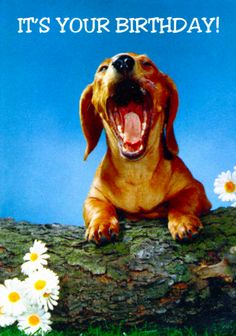 Happy Dachshund What a Beautiful Morning (Paper and Ephemera - Postcards - Dogs) at Tymes Remembered Vintage Dachshund, Dachshund Love, Vintage Dog, Weenie Dogs, Doggies, Retro Images, Beautiful Morning, Funny Cute, Dogs And Puppies