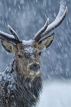 New Wonderful Photos: Snowy Antlers