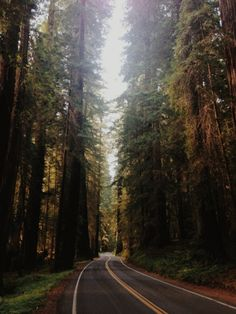 Avenue of the Giants. Humboldt Redwoods State Park, CA.