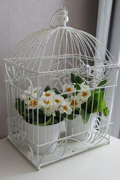 Kevätesikot häkissä
