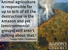 "animal agriculture is responsible for up to 91% of all the destruction in the Amazon and yet [environmental groups] still aren't talking about that""~ courtesy #cowspiracy #eco #vegan raising animals for food is responsible for climate change, rainforest destruction, excessive water consumption, world hunger, wildlife extinction, land use ..."