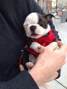 Adorable Sleeping Puppy