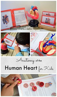 How we learn the anatomy of the human heart