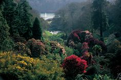 Rhododendron Valley in spring, Trebah Garden, Cornwall Days Out In Cornwall, Gardens Of The World, English Country Gardens, Cornwall England, Spring Garden, Historical Sites, Vermont, Beautiful Gardens, Countryside