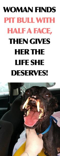 This dog will live a happy life she deserves after the horrible things she went through. I Love Dogs, Puppy Love, Cute Dogs, Animals And Pets, Cute Animals, Stop Animal Cruelty, Faith In Humanity Restored, Animal Rights, Dogs And Puppies
