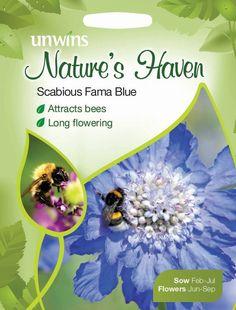 Buy Scabious Fama Blue - Seeds online | Unwins