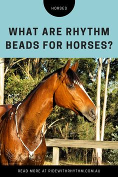 Learn more about this secret training tool all the top horse riders are using. Tap the link to our website