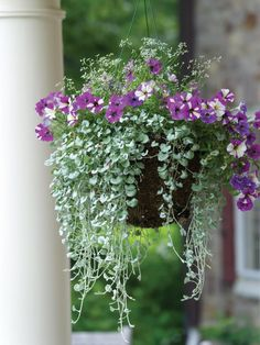 Container Gardening Ideas Fire up fall color with some can't-miss container garden recipes. - Discover fall container garden recipes filled with plants like pansies, kale, and ornamental grasses, from the experts at HGTV Gardens. Hanging Plants Outdoor, Indoor Plants, Indoor Herbs, Hanging Planters, Air Plants, Fall Planters, Garden Planters, Succulent Planters, Succulents Garden