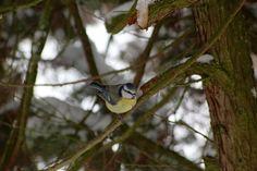 Marlene's Blog: #birds