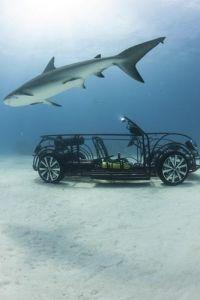 VW Beetle Shark Cage back for Shark Week 2013