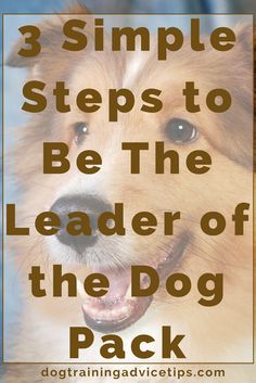 How to be the leader of your dog pack Dog Minding, Easiest Dogs To Train, Aggressive Dog, Dog Barking, Dog Training Tips, Training Classes, Training School, Crate Training, Training Online