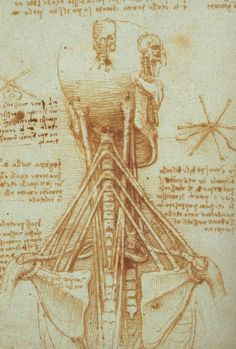 Leonardo da Vinci, sketches of the neck and shoulders. Though these sketches… Michelangelo, Leonardo Da Vinci Dibujos, Anatomy Of The Neck, High Renaissance, Human Anatomy, Body Anatomy, Oeuvre D'art, Illustrations, Graphic