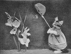 See the Kitten, Full of Fun, Harry Whittier Frees, 1921