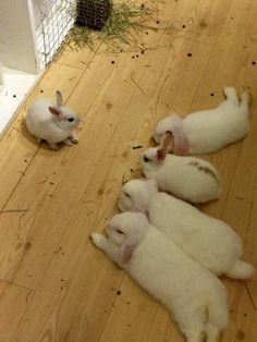 Is this a bunny meeting or is the little one in a lot of trouble?