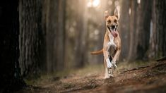 Domácí müsli tyčinky - Proženy Muesli, Dogs, Animals, Animales, Animaux, Pet Dogs, Doggies, Animal, Dog