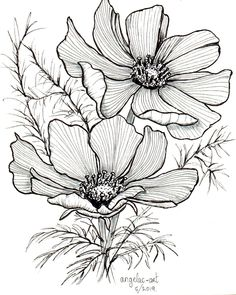Cosmos Art Print, Black Ink Flower Drawing, Minimalist Botantanical Art, Home Decor, Cottage Garden Style, Wildflowers, Honey Bee Friendly