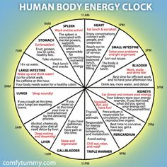 The Chinese Body Clock is based on Chinese medicine and the body organ Qi(energy) cycle. It's the idea that there is a cyclic flow of energy through the body that moves in two hour intervals through the various organ systems.