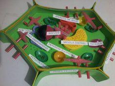 Image of: Sel Hewan Resultado De Imagen Para Maqueta Reciclada De La Celula Vegetal Pinterest 13 Best Em And Evie Images Crafts For Kids Kid Crafts Crafts