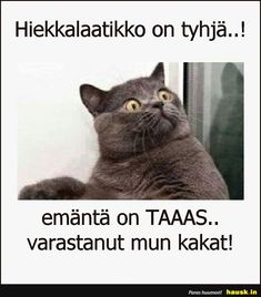 Hiekkalaatikko on tyhja. Lol, Thoughts, Humor, Wallpaper, Cats, Funny, Animals, Gatos, Animales
