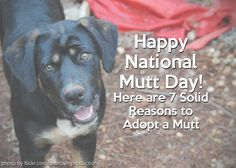 7 Solid Reasons to Adopt a Mutt | Dogster. Happy #National #Mutt #Day! All but one of our dogs have been mutts, and that one was a rescue. Mutts are awesome dogs! July 31st and December 2nd. Why two dates? Because the majority of shelters are filled with mixed-breed dogs, and they need a chance!