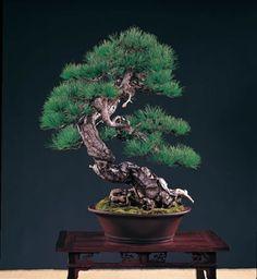 Artist: Cheng Cheng-Kung Taiwan Red Pine (Pinus taiwanensis)