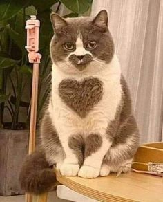 Sooo much heart .- Sooo viel Herz… Sooo much heart … - I Love Cats, Crazy Cats, Cute Cats, Funny Cats And Dogs, Cats And Kittens, Cute Baby Animals, Funny Animals, Image Chat, Photo Chat