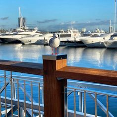 Good morning ☀️ This seagull has the right idea, happily perched on our stainless steel post cap adding that finishing touch to Marina Mirage's balustrade upgrade. Stainless Steel Fabrication, Cap, Touch, Building, Travel, Baseball Hat, Viajes, Buildings, Destinations