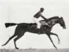 MUYBRIDGE MOVES    Eadward Muybridge practically invented animation when he took time lapse photos of animals against a gridded backdrop.In this mini-movie , each frame was separated and animated...