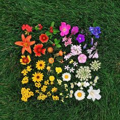 Color Coded Food and Flowers Photographed by Emily Blincoe