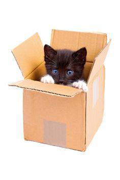 Todo Mascotas: ¿Por qué los gatos adoran las cajas de cartón?