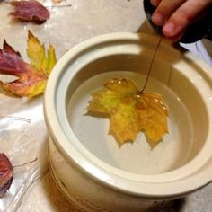 Easy instructions for waxing fall leaves for autumn or Thanksgiving decorations.""