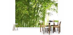 Bambu - Fototapeter & Tapeter